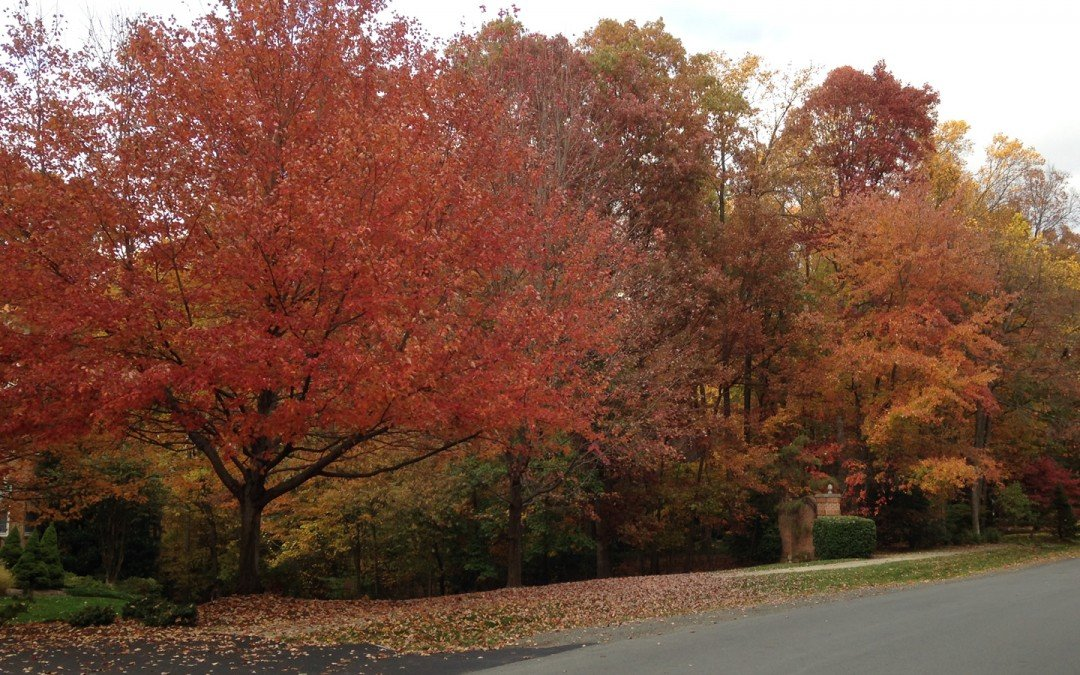 Fall leaves – Clean up time