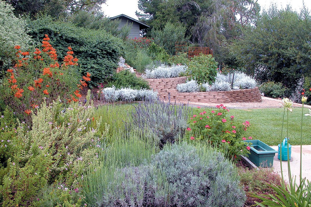 Native Plants And Sustainable Gardening